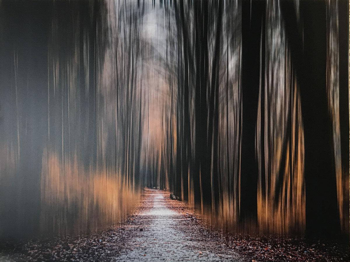 """Werk von Christian Herrmann - Titel """"Magic Forrest"""" - Technik: Foto auf Acryl"""